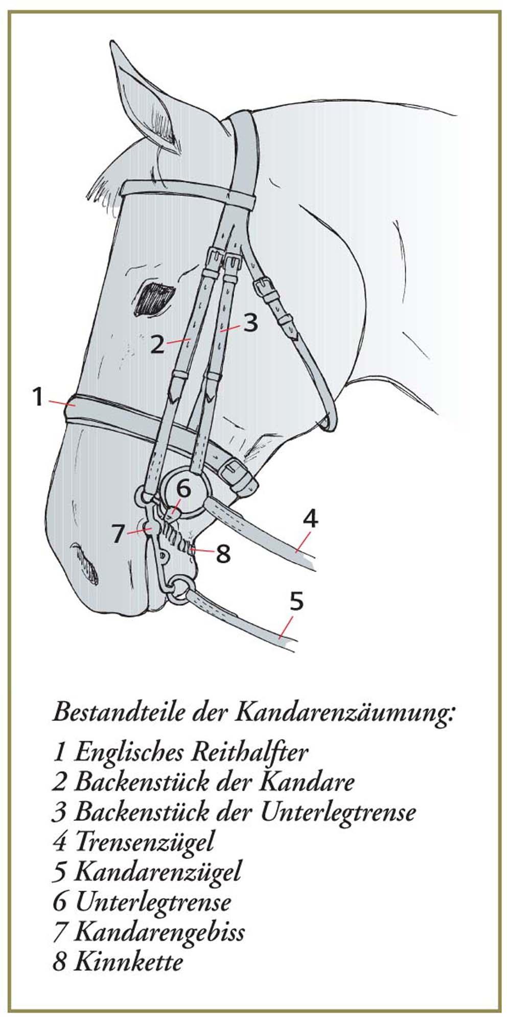 Die korrekt verschnallte Kandare, wie sie die Richtlinien für Reiten und Fahren, Band 1, empfehlen.