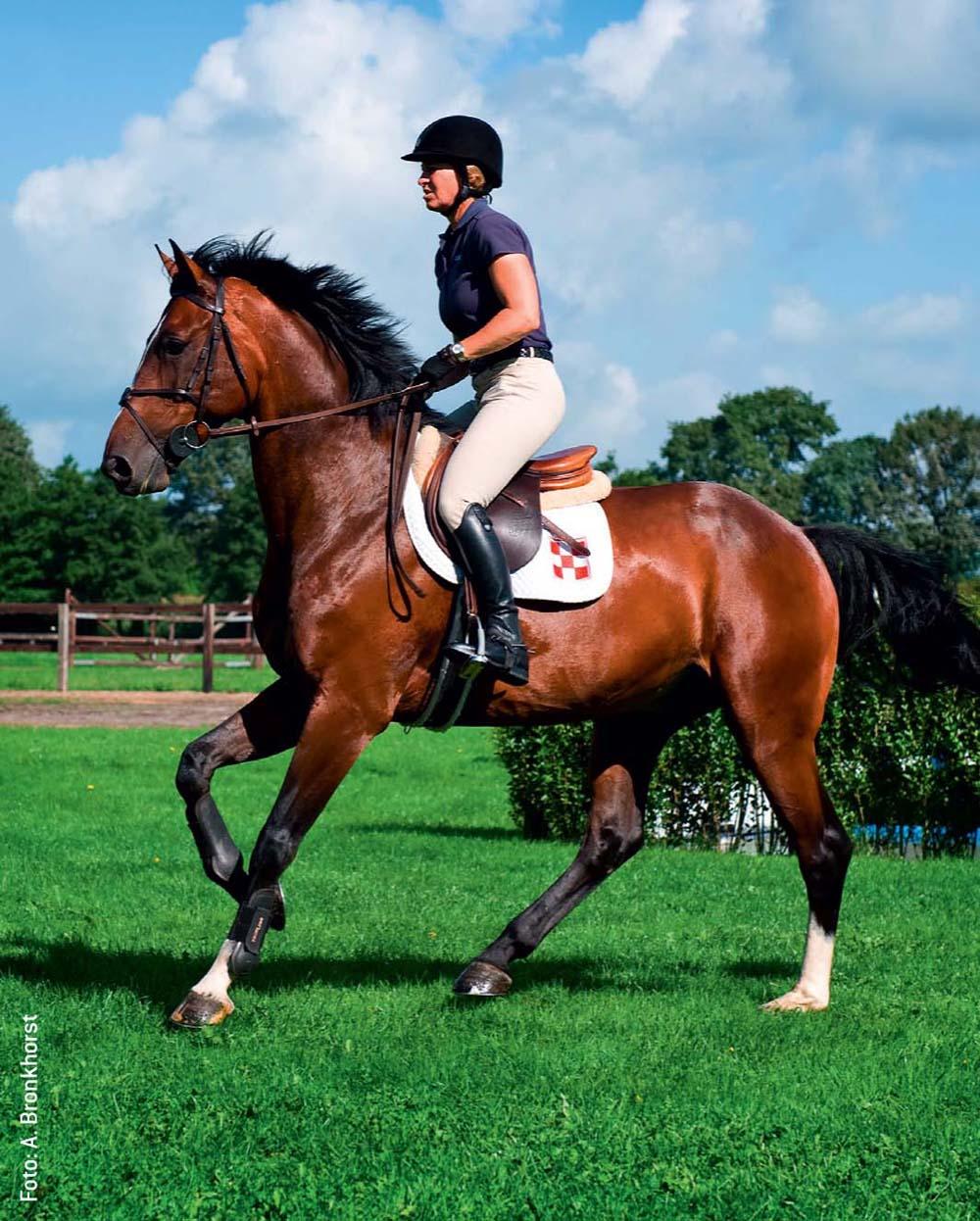 Im Training erarbeitet Johannsmann ein höheres Grundtempo mit den Reitern.