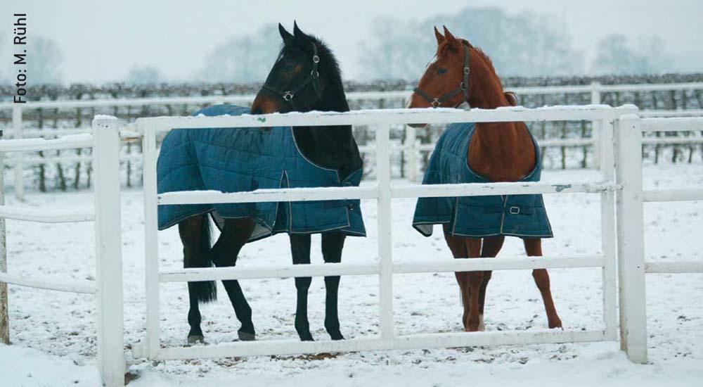 Alte Pferde frieren – wie alte Menschen – schneller. Bei sehr tiefen Temperaturen sollten sie eingedeckt werden, auch wenn sie augenscheinlich ein dickes Winterfell haben.