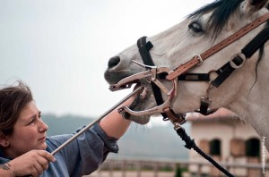 Die Zähne müssen bei alten Pferden unbedingt regelmäßig kontrolliert werden, da sich schneller Haken bilden.