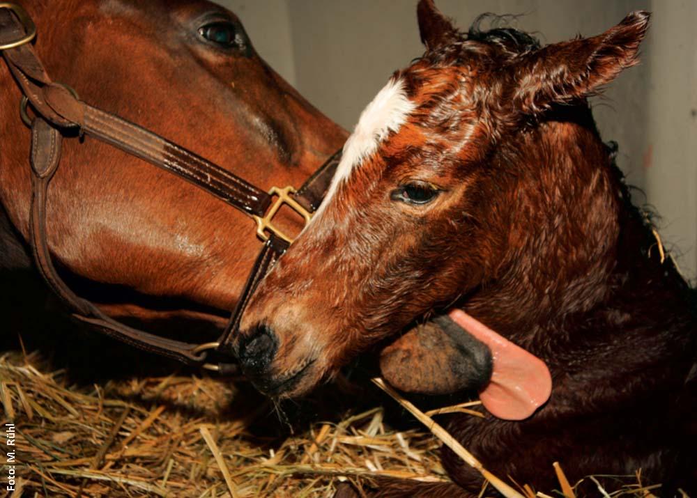 Geschafft: Mutter und Kind haben die Geburt heil überstanden und nehmen den ersten Kontakt auf.