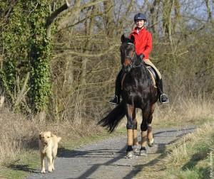 Das Schrittreiten im Gelände veranlasst das Pferd, energisch abzufußen und sich innerlich zu entspannen.