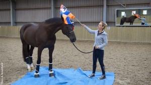 Kein Anhängsel, sondern sinnvolle Ergänzung zum Reiten ist die Bodenarbeit. Als Gelassenheitstraining kann sie Pferden die Scheu vor Unbekanntem nehmen und so sowohl dem Vierbeiner als auch seinem Reiter mehr Sicherheit geben.