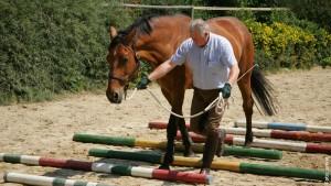 Trittsicherheit und Konzentration des Pferdes fördert die Bodenarbeit über Stangen.