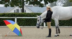 Keine Angst vor fremden Gegenständen - alles kann das Pferd lernen.