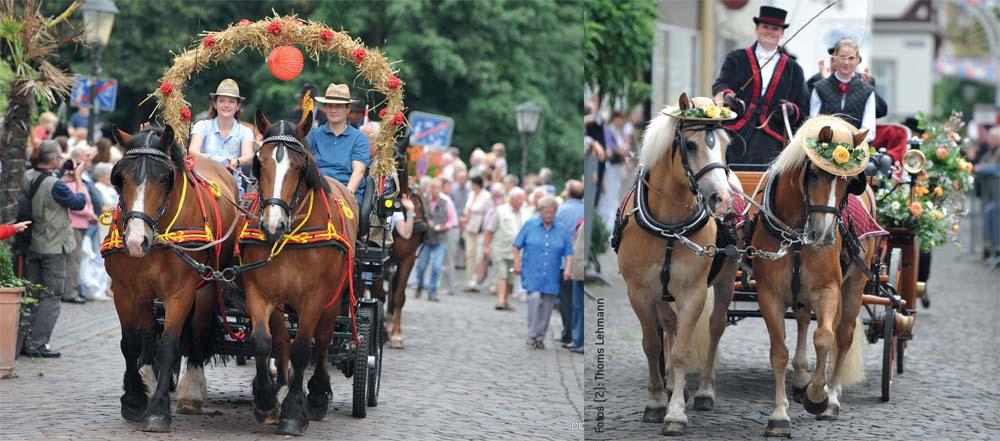 Ungezählte Kutschen präsentieren sich in der Warendorfer Altstadt.