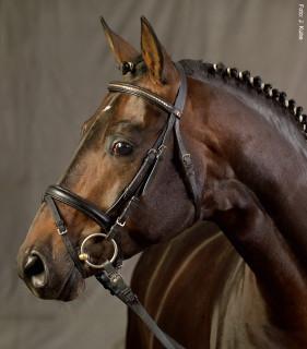 Ein richtig verschnallter Nasen- und Sperrriemen lässt das Pferd noch kauen und verhindert das Zusammenpressen des Kiefers und der Muskulatur.