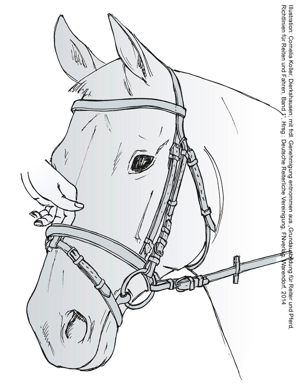 ausmalbilder pferde dressur  top kostenlos färbung seite