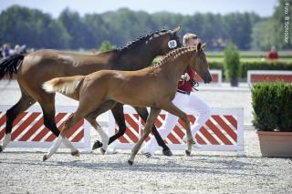 Besonders junge Pferde, deren Immunsystem noch nicht ausgereift ist, sind anfällig für Erreger und Krankheiten.