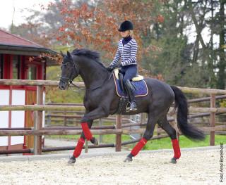 Hier gibt die Reiterin jede Anlehnung auf – in der Hoffnung, dass sich das Pferd nach vorwärts-abwärts dehnt.