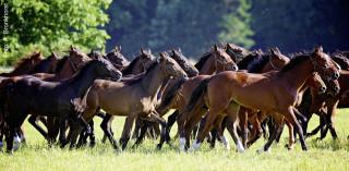 Eine Herde braucht viel Platz, zwischen 0,25 und 0,5 Hektar pro Pferd. Für die Entfernung von Kot auf großen Flächen stehen heute etliche Geräte zur Verfügung.