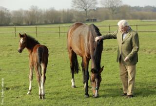 Hans Helmut Sievers genießt es, die Stuten und ihre Fohlen auf der Weide zu besuchen. Auf dem Foto eine Casiro I-Tochter, die ein Stutfohlen von Commissario führt.