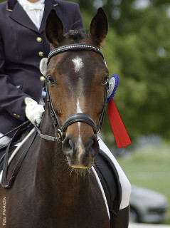 Um in Klasse E gemäß LPO zu starten, brauchen Reiter eine Schnupperlizenz und ein eingetragenes Turnierpferd.