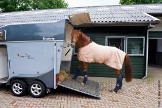 Manchmal braucht man etwas Geduld, bis das noch unerfahrene Pferd auf den Hänger geht.