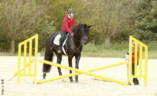 """Vertrauensbildende Maßnahme: Hat das Pferd Angst vor einem Hindernis, soll es alle Zeit bekommen, das """"unbekannte Objekt"""" in Augenschein zu nehmen."""
