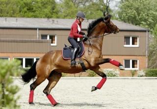 Mit Luftsprüngen und Temperamentsausbrüchen des jungen Pferdes sind unerfahrene Reiter häufig überfordert. Die routinierte Reiterin auf diesem Foto behält die Kontrolle.