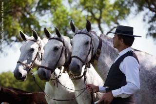 Pferdefestival Golegã