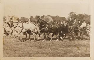 Luthers Eltern fuhren gerne vierspännig, natürlich mit Holsteiner Karossiers. Foto: privat