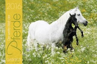 Kalender: Die weite Welt der Pferde