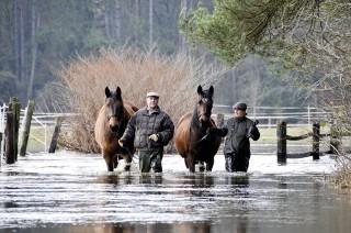 Retter in der Not waren gefragt als das Hochwasser des Jahres 2012 Pferdeweiden einschloss. Foto: dpa