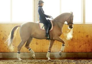 Sie ist die Meisterin des richtigen, also effektiven Treibens: Isabell Werth, hier auf ihrer wunderbaren Stute Bella Rose. Foto: J. Toffi
