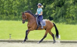 """Fast alle Pferde tun sich auf einer Seite schwerer als auf der anderen. Um die Geraderichtung im Galopp zu verbessern, muss zunächst die Trabarbeit """"stimmen"""". Foto: Arnd Bronkhorst"""
