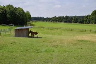 Die Weiden sind mit massiven Holzzäunen und Unterständen ausgestattet.