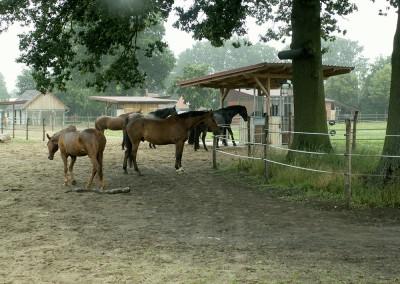 19 Pferde leben im Aktivstall in schönster Harmonie.
