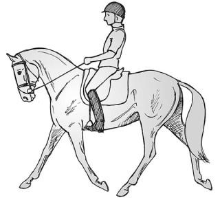 Die Stirn-Nasenlinie ist hinter der Senkrechten, das Pferd ist eng im Hals. Der Reiter sitzt gegen die Bewegung des Pferdes.
