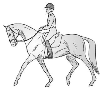 Das Pferd geht hinter dem Zügel. Es tritt nicht genügend von hinten nach vorne an den Zügel heran.