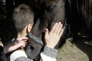Mit Ponys Momente der Zuneigung und Wärme erleben. Foto: Kerstin Schmidt