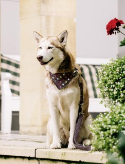Eskadron Nici - Hund