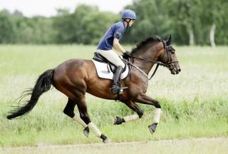Nur wenn ein Pferd optimal im Training ist, kann es die geforderte Leistung erbringen. Das gilt für Andreas Dibowski (Foto) in der Vielseitigkeit genauso wie für den Freizeitreiter, der einen langen Ausritt plant. Foto: J. Toffi